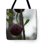 Oak Galls Tote Bag