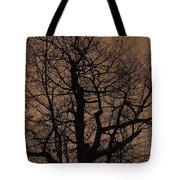 Oak Silhouette  Tote Bag