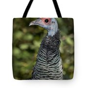 Ocellated Turkey Hen Tote Bag