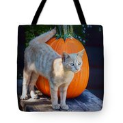 October Kitten #1 Tote Bag