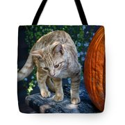 October Kitten #2 Tote Bag