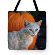 October Kitten #3 Tote Bag