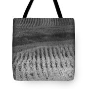 Ohio Cornfield Tote Bag