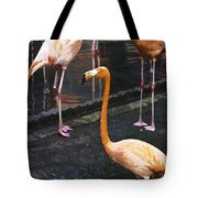 Oil Painting - Focus On A Single Flamingo Inside The Jurong Bird Park Tote Bag
