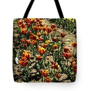 Oil Painting - Red And Yellow Tulips Inside The Tulip Garden In Srinagar Tote Bag