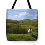 Okehampton Sheep  Tote Bag