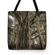Old Banyan Tree Tote Bag by Adam Romanowicz
