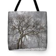 Old Elm Tote Bag