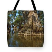 Old-growth Cypresses At Lake Fausse Tote Bag