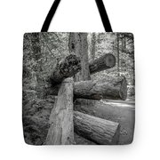 Old Growth Forest Black And White Collection 4 Tote Bag