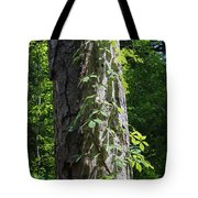 Old Growth  Loblolly Pine - Congaree Swamp Tote Bag