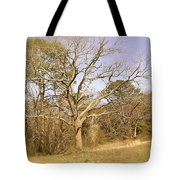 Old Haunted Tree Tote Bag