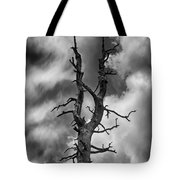 Old Trees Reach For The Sky Tote Bag