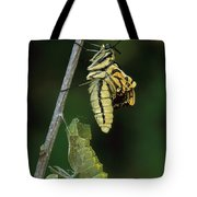 Oldworld Swallowtail Butterfly Tote Bag