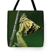 Oldworld Swallowtail Emerging Tote Bag