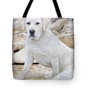 On The Lookout Tote Bag by Suzanne Oesterling