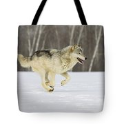 On The Trot Tote Bag