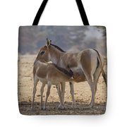 Onager Equus Hemionus 2 Tote Bag