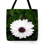 One Hit Wonder Gerbera Daisy Tote Bag