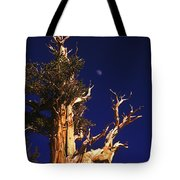 One Of The Ancient Ones Tote Bag