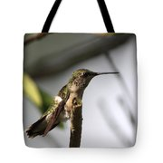 One Out Of Place - Hummingbird Tote Bag