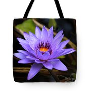 One Purple Water Lily Tote Bag by Carol Groenen