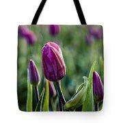 One Tulip Among Many Tote Bag