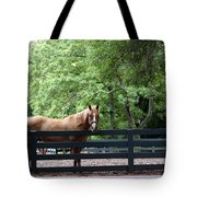 One Very Pretty Hilton Head Island Horse Tote Bag