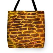 Onion Skin Tote Bag by Garry DeLong