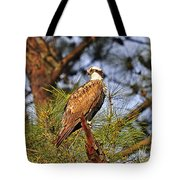 Opulent Osprey Tote Bag by Al Powell Photography USA