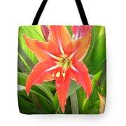 Orange Amaryllis Flower Blooms In Springtime Tote Bag