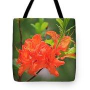 Orange Azalea At Moore State Park Tote Bag