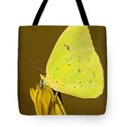 Orange Barred Sulfur Butterfly Tote Bag