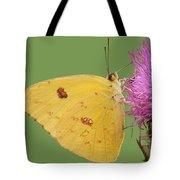 Orange Barred Sulphur Tote Bag