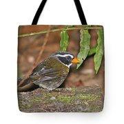 Orange-billed Sparrow Tote Bag