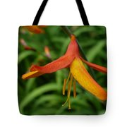 Orange Crocosmia  Tote Bag