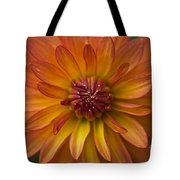 Orange Dahlia Blossom Tote Bag