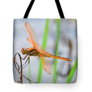 Orange Dragonfly On The Water's Edge Tote Bag