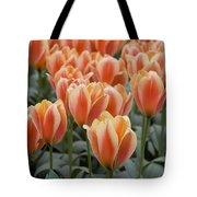 Orange Dutch Tulips Tote Bag