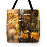Orange Fall Maple Tote Bag by Elena Elisseeva