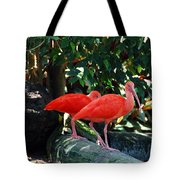 Orange Feathered Friends Tote Bag