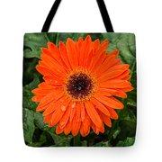 Orange Gerber Daisy 3 Tote Bag