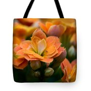 Orange Kalanchoe With Company Tote Bag