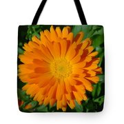 Orange Marigold Close Up With Garden Background Tote Bag