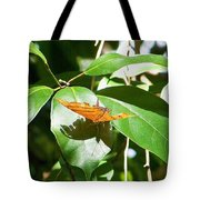 Orange On Green Tote Bag