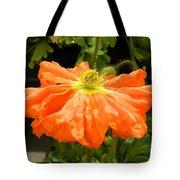 Orange Skirted Poppy  Tote Bag