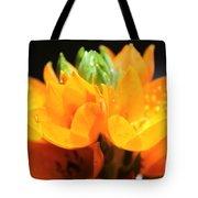 Orange Star Tote Bag
