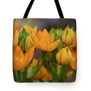 Orange Stars - Floral - Ornithogalum Dubium - Sun Stars Tote Bag