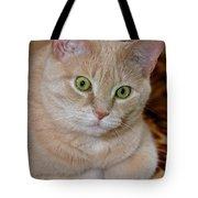 Orange Tabby Cat Poses Royally Tote Bag