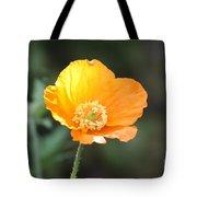 Orange Welsh Poppy Tote Bag